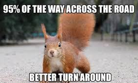 squirrel-in-the-road.jpg